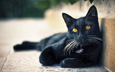 black-cats-awesome-www-gibbahouse-13