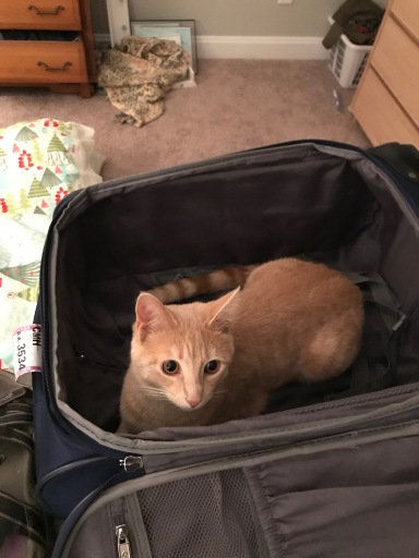 Hermione the cat waiting to go on a trip!